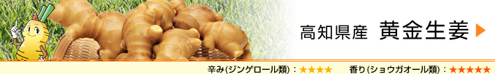 高知県産 黄金生姜