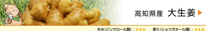 高知県産 大生姜